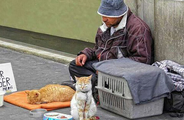 homeless man with cats