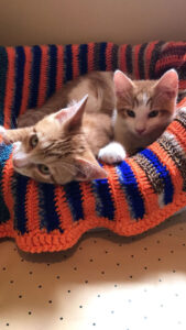 Two kittens in bed