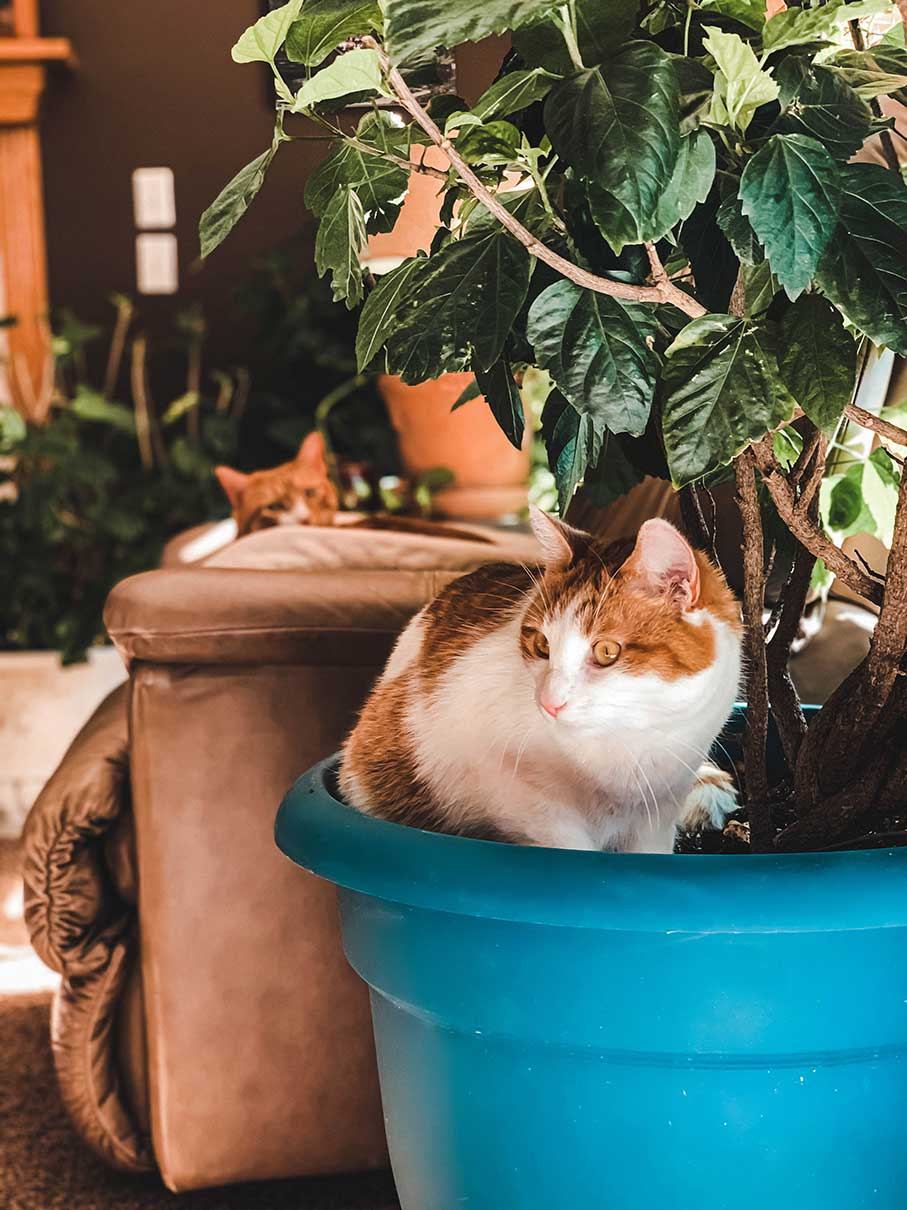 Cats in Plant