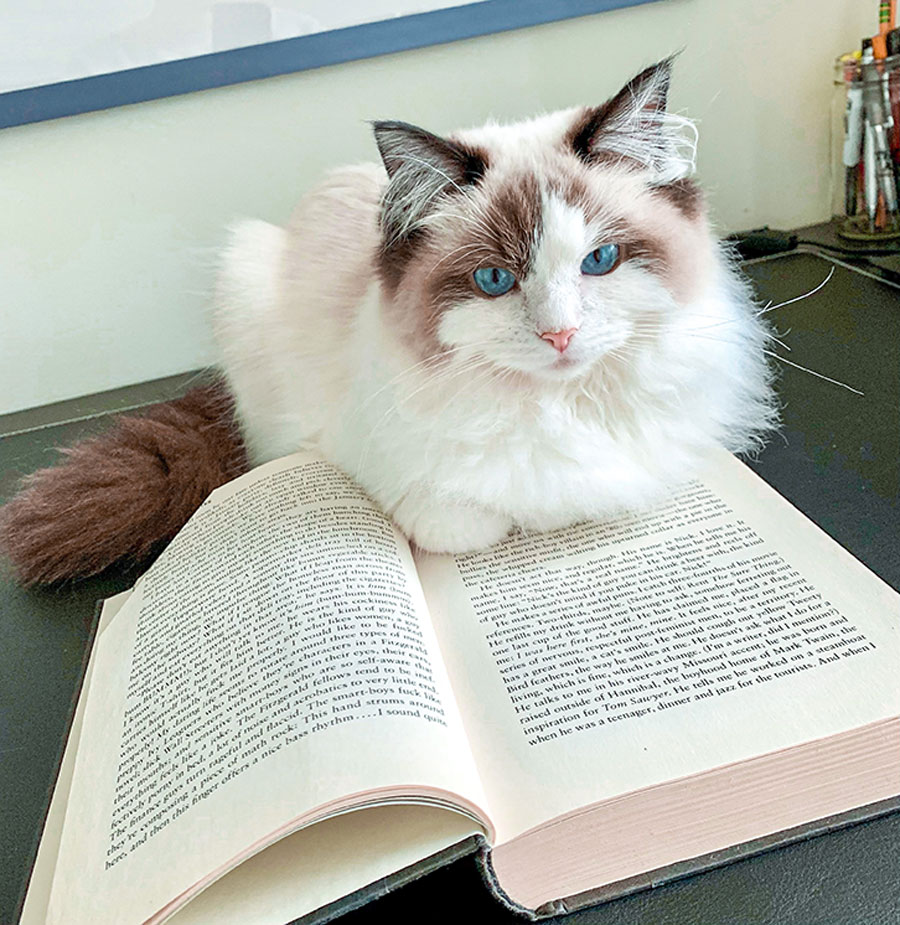 Cat on a book