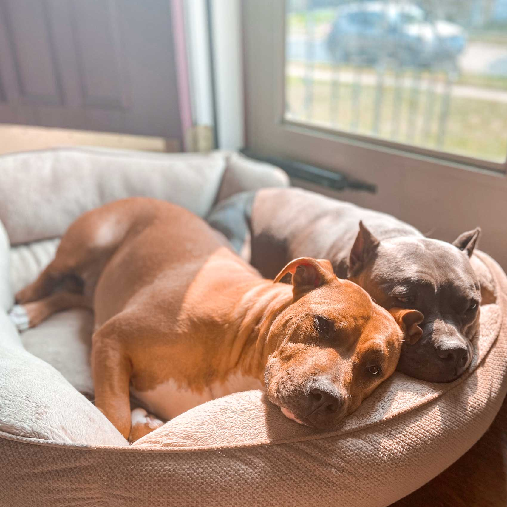 The Problem with Pit Bulls